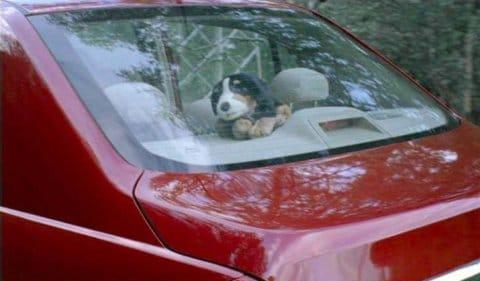 8_Nissan_puppy